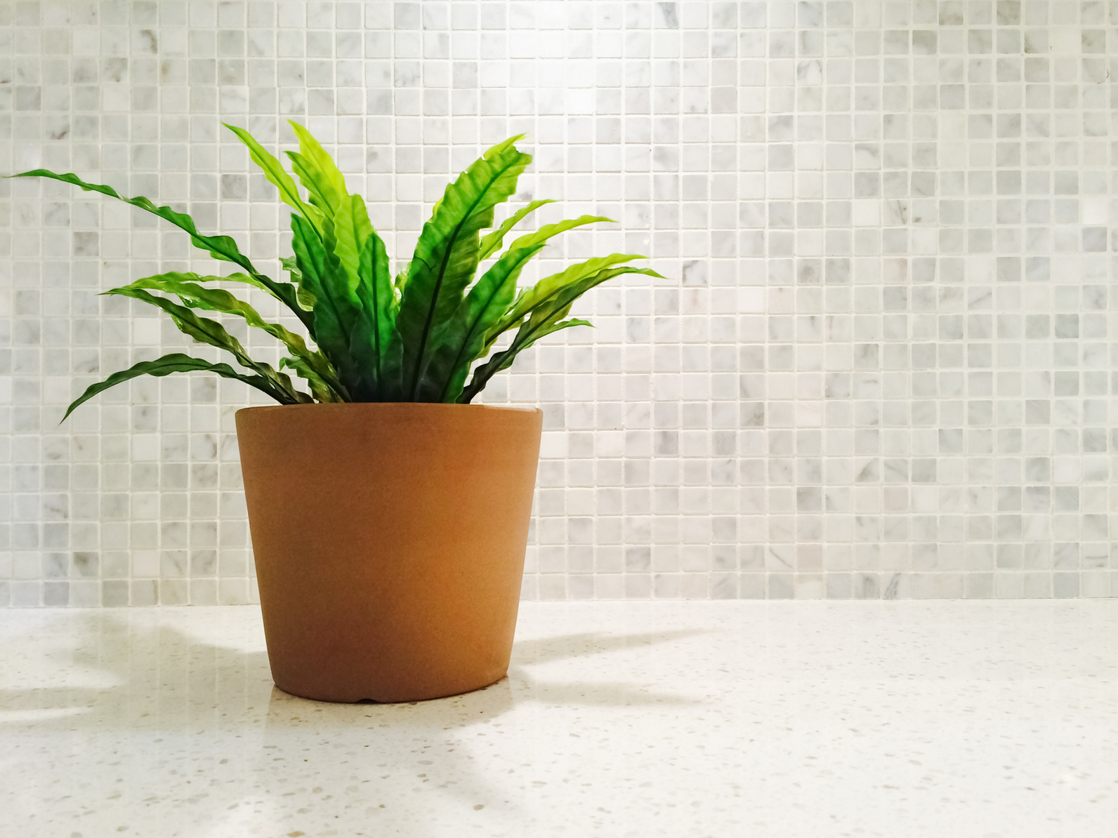 Plants For Kitchen To Decorate It: How To Decorate With Kitchen Plants